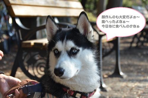 20111123inokashira3_2